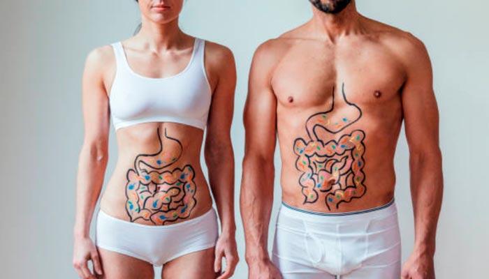 sistema-digestivo-saudavel